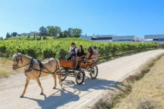 A horse carriage ride to discover the vineyards of Quinta da Boavista,